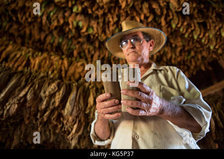 Cuba, Republic of Cuba, Central America, Caribbean Island. Havana district. Tobacco farm in Pinal dal Rio, man at - Stock Photo