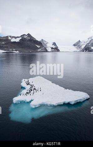 Adelie Penguins on ice floe, Antarctica - Stock Photo