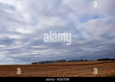 Remote country farm landscape with trees on the horizon. Vast, dry, harvested cornfield in foreground under scattered - Stock Photo