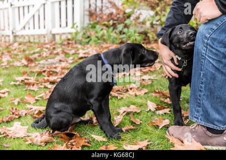 Dog Training Bellevue Washington
