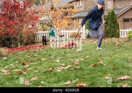 'Shadow', a three month old black Labrador Retriever puppy, chasing after a twelve year old boy pulling a rake behind - Stock Photo