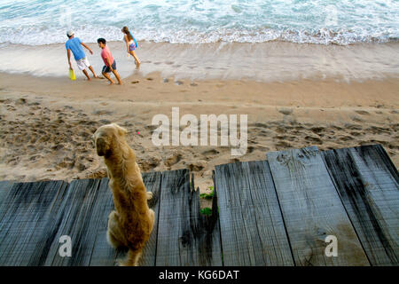 A dog on a sandy beach watching people and a beautiful blue ocean  in San agustinillo, Mexico - Stock Photo
