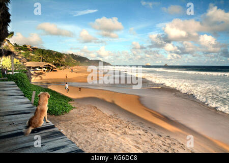 A dog on a sandy beach watching a beautiful blue ocean in San Agustinillo, Mexico - Stock Photo