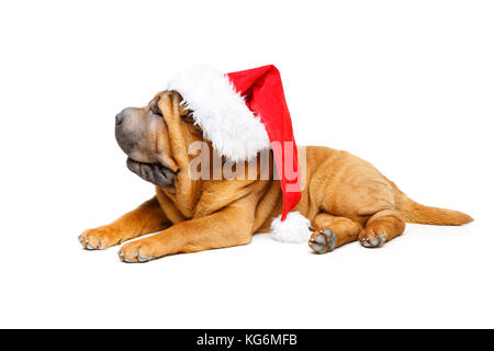 shar pei puppy in christmas hat - Stock Photo