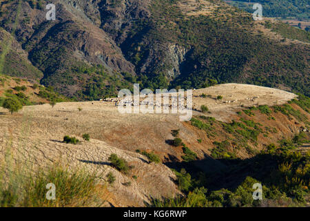 Shepherds and grazing sheep and goats on a plateau in a mountain area in Thessalia, Greece - Stock Photo
