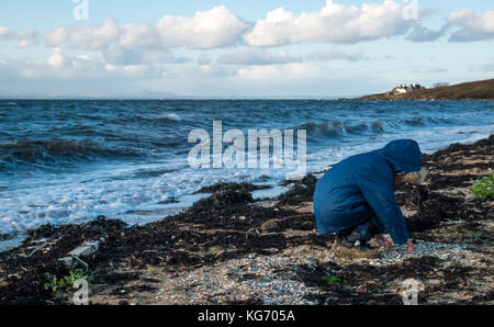 Young boy in Winter jacket bending down on a beach next to waves searching for shells and sea glass on a cold windy - Stock Photo