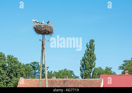 A family of storks standing in their nest high on top of the electricity pole above the roofs - Stock Photo