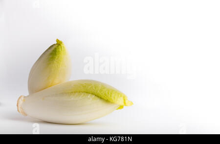 belgian witloof isolated on a white background - Stock Photo