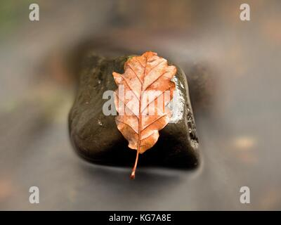 Fall oak leaf. Caught rotten old oak leaf on stone in blurred water of mountain river. Autumn symbol, life circle. - Stock Photo