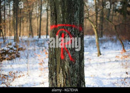 Wald Forstwirtschaft - Stock Photo