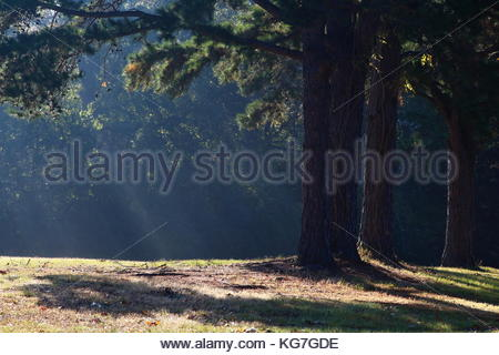 Early morning sunrays streaming through trees on a foggy morning - Stock Photo