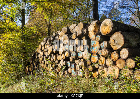 Holzpolter im Wald - Stock Photo