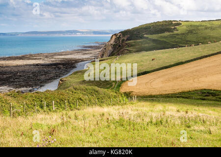 Greencliff; Low Tide View - Looking North Across the Pebble Beach and Fields Towards Bideford and Saunton: Greencliff, - Stock Photo