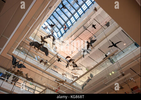 Birds models suspended into the Grand Hall of the MUSE Science Museum in Trento, Italy, designed in 2013 by Renzo - Stock Photo