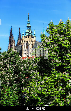 Horse chestnut in bloom Prague castle Prague spring Czech Republic, Europe springtime - Stock Photo