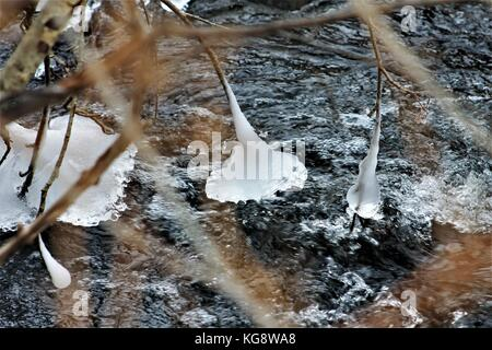 Ice formations,formed by water spray from the river, on the tips of tree branches hanging over the Virginia River. - Stock Photo