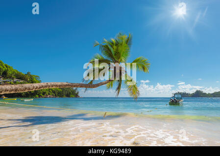 Palm tree over beautiful beach on tropical island - Stock Photo