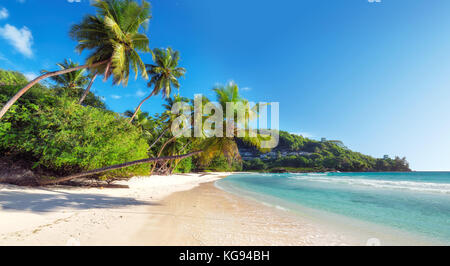Beautiful coconut palm on tropical beach - Stock Photo