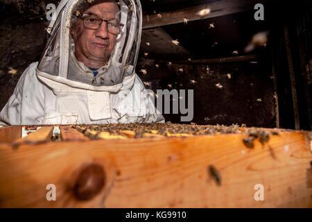 beekeeper working a honey beehive - Stock Photo