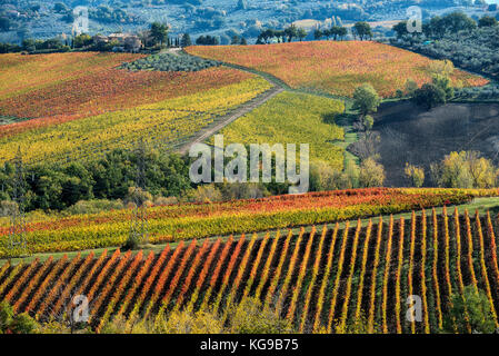 Bevagna, Perugia, Umbria, green heart of Italy. The magic of the autumn colors of the vineyards and the Umbrian - Stock Photo