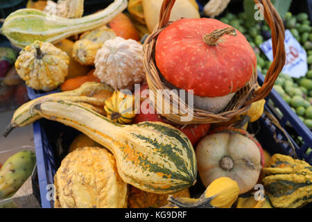 Mix of squashes inside plastic case on market stall. - Stock Photo