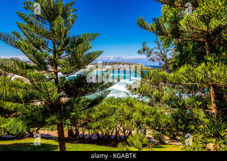 Pine trees at Bondi Beach in Sydney, NSW, Australia - Stock Photo