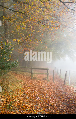 Woodland landscape on a foggy autumn morning at Ranmore Common in the North Downs, Surrey, UK. A beautiful day in - Stock Photo