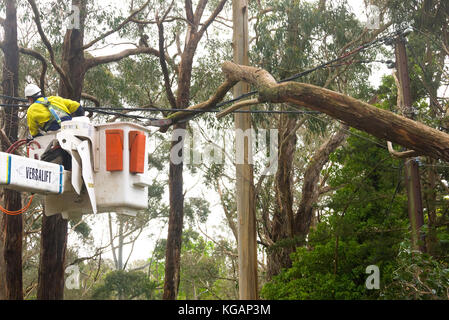 Emergency services worker preparing to cut through a tree resting on power lines in Stirling, Adelaide Hills, South - Stock Photo