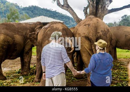 Chiang Mai, Thailand Elephant Nature Park - Stock Photo