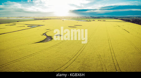 Aerial panorama of canola field at sunset - Stock Photo