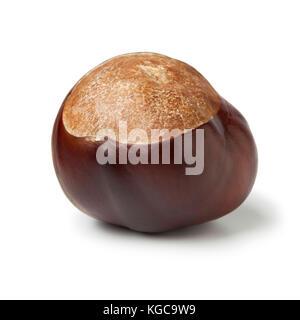 Single  Horse chestnut, Aesculus hippocastanum, on white background - Stock Photo
