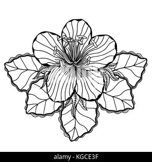 Flower on a white background in a black lines. Doodle floral image for coloring book and designs ideas - Stock Photo