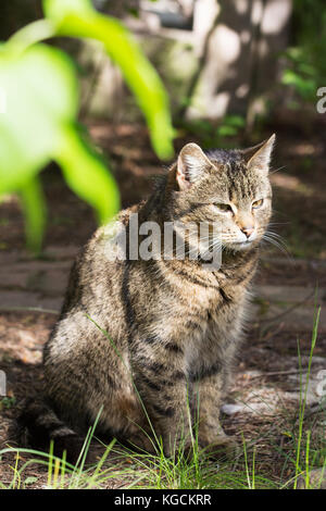 Old female stray cat sitting and resting in a shade - Stock Photo