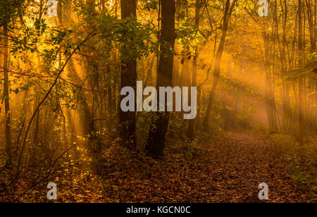 Lovely autumn morning scenery with sunbeams and fog - Stock Photo