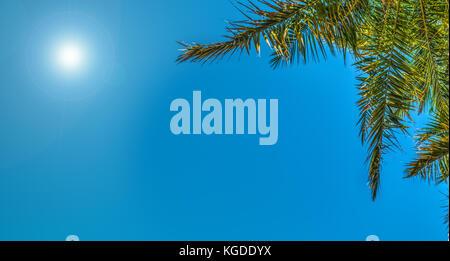 Shining sun over a palm tree in California - Stock Photo
