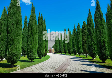 Alley among firs in Bosnia and Herzegovina - Stock Photo