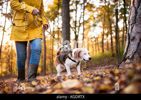 Senior woman with dog on a walk in an autumn forest. - Stock Photo