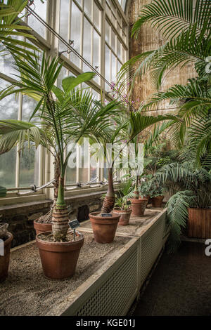 The National Botanic Gardens, Dublin, Ireland. - Stock Photo