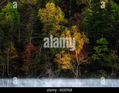 Japanese Fall Foliage - Stock Photo