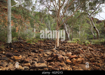kings canyon creek and dried up   riverbed  in the northern territory outback  australia - Stock Photo