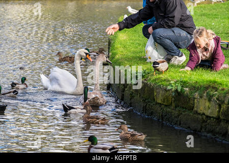 Swans - a father and his two children feeding swans and ducks on a lake. - Stock Photo