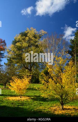Autumn Colour at Bedgebury Pinetum - Stock Photo