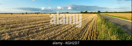 Agricultural hay field with bales and road. Sunset light and blue sky. Panoramic view. - Stock Photo