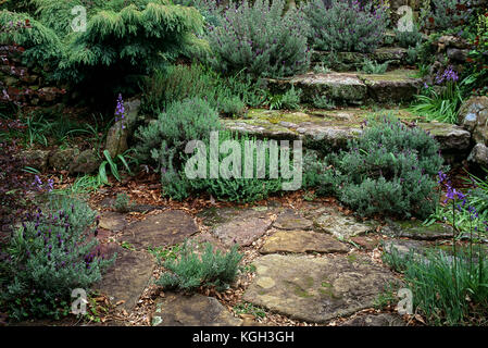 Flagstone steps with lavender (Lavandula stoechas), growing in crevices at Buskers End Garden. Bowral, Southern - Stock Photo