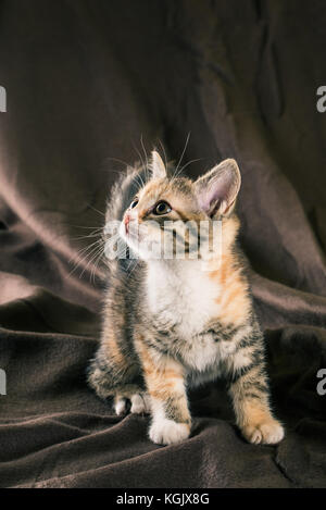 Vertical photo of small kitten with tabby fur. Baby cat has white chest and paws with few red spots. Animal stands - Stock Photo