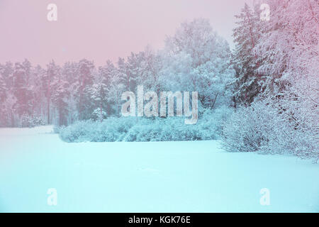 Sunlight in the winter forest. Panoramic view. Panorama winter fairy tale - Stock Photo