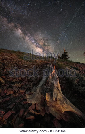 Summer Milky Way above ancient Bristlecone Pines in California. - Stock Photo