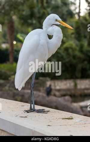 View of White Egret Standing Still - Stock Photo