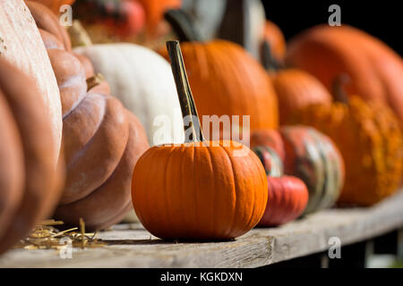 Pumpkins and produce on display at a roadside farm stand. - Stock Photo