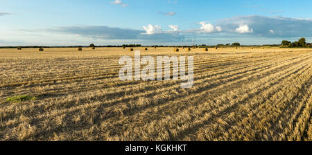 Agricultural hay field with bales. Sunset light and blue sky. Panoramic view. - Stock Photo